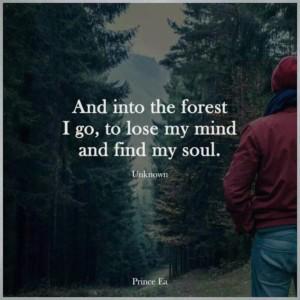 vpatekvetri do lesa